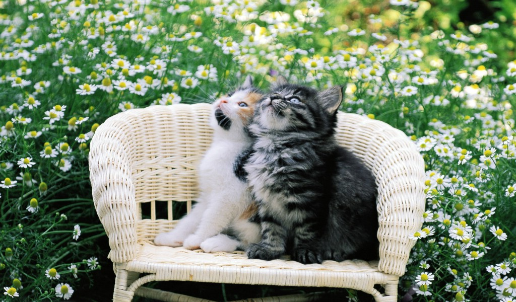 椅子上的小猫咪图片壁纸