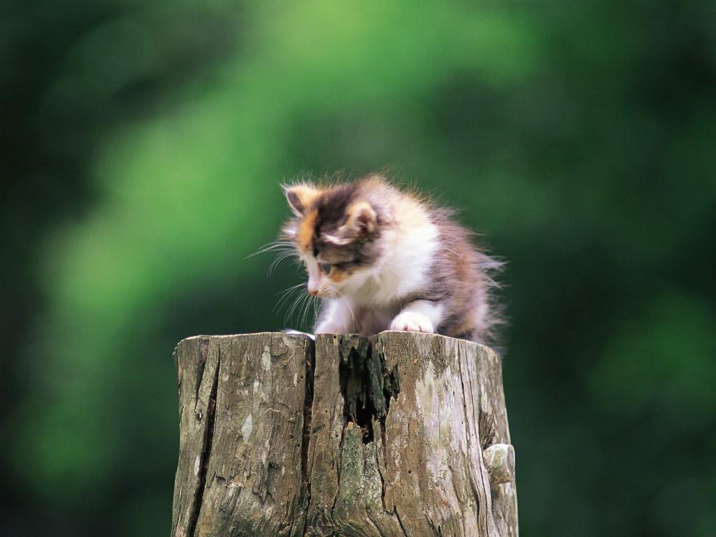 后院的小小猫咪 - 香儿 - xianger