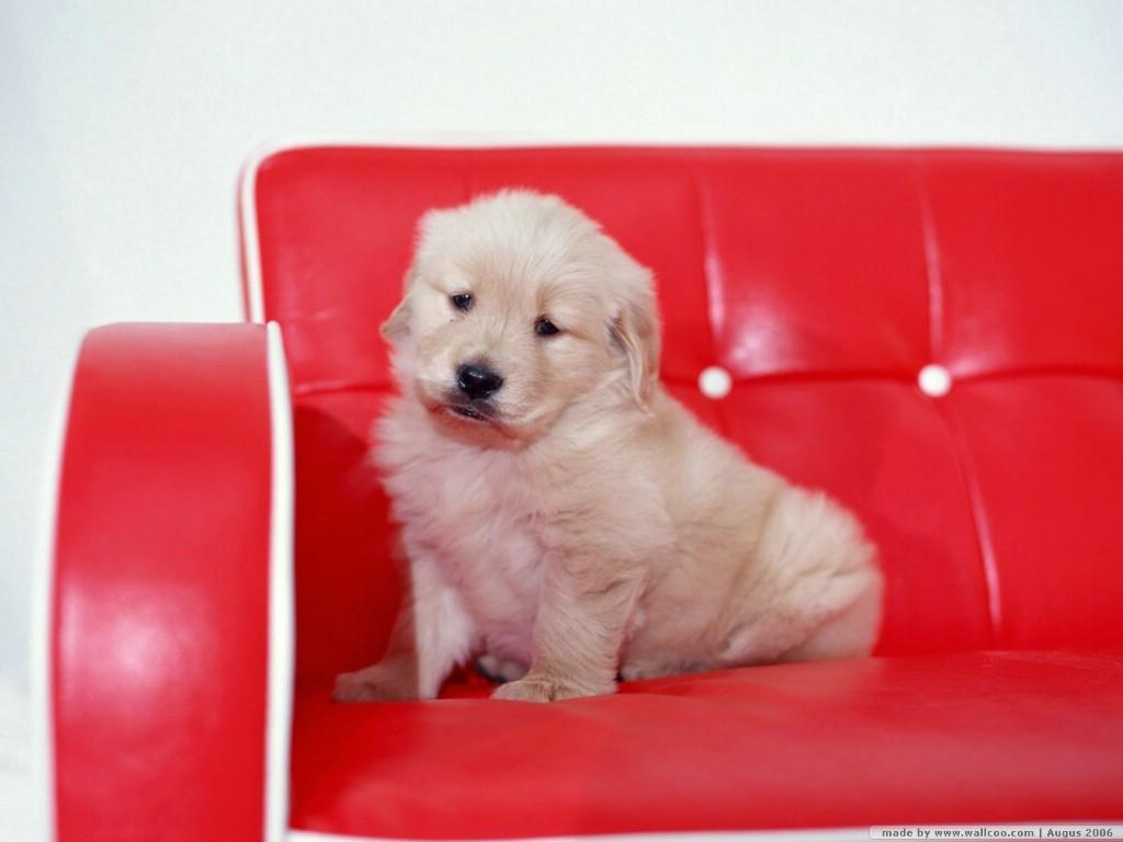壁纸1024×768家有宠物 可爱狗宝宝 小狗照片 小狗壁纸