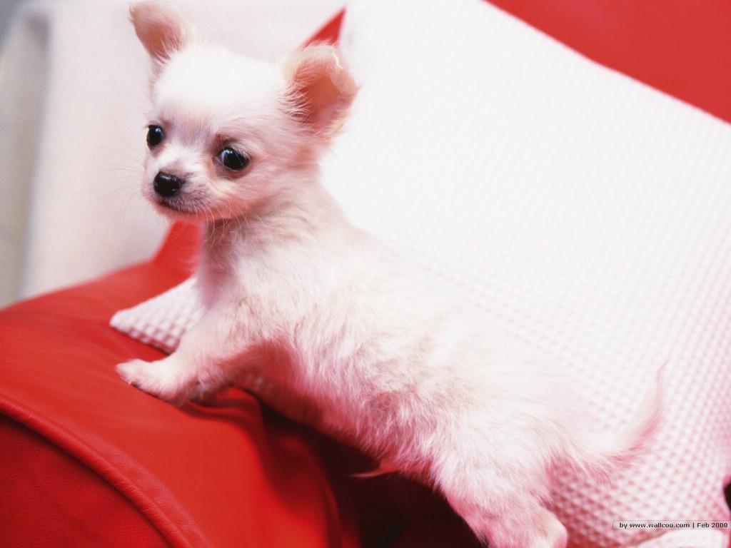 壁纸1024×768宠物小狗宝宝壁纸