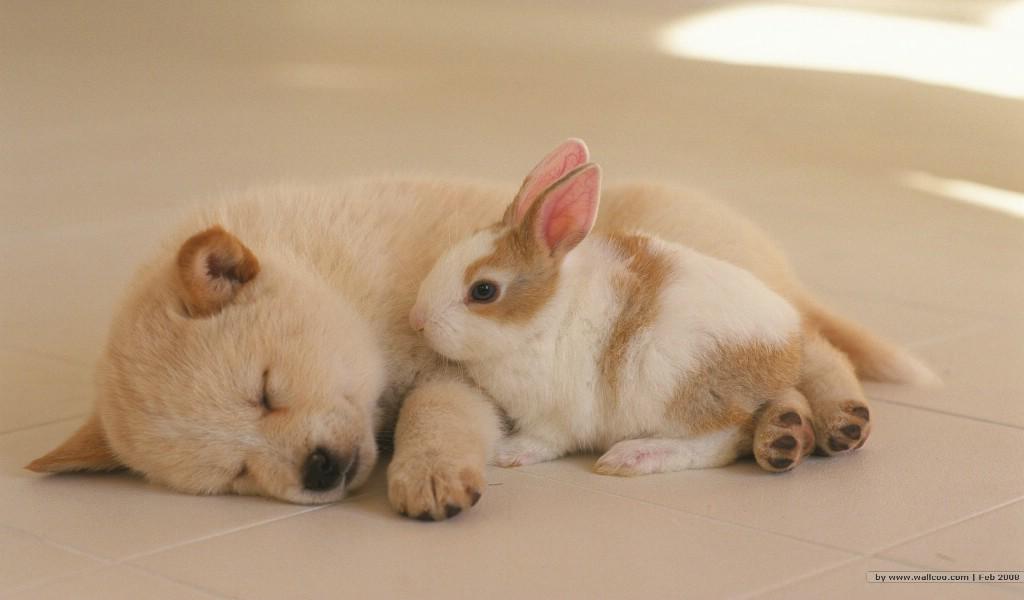 壁纸1024×600可爱幼犬小狗狗图片