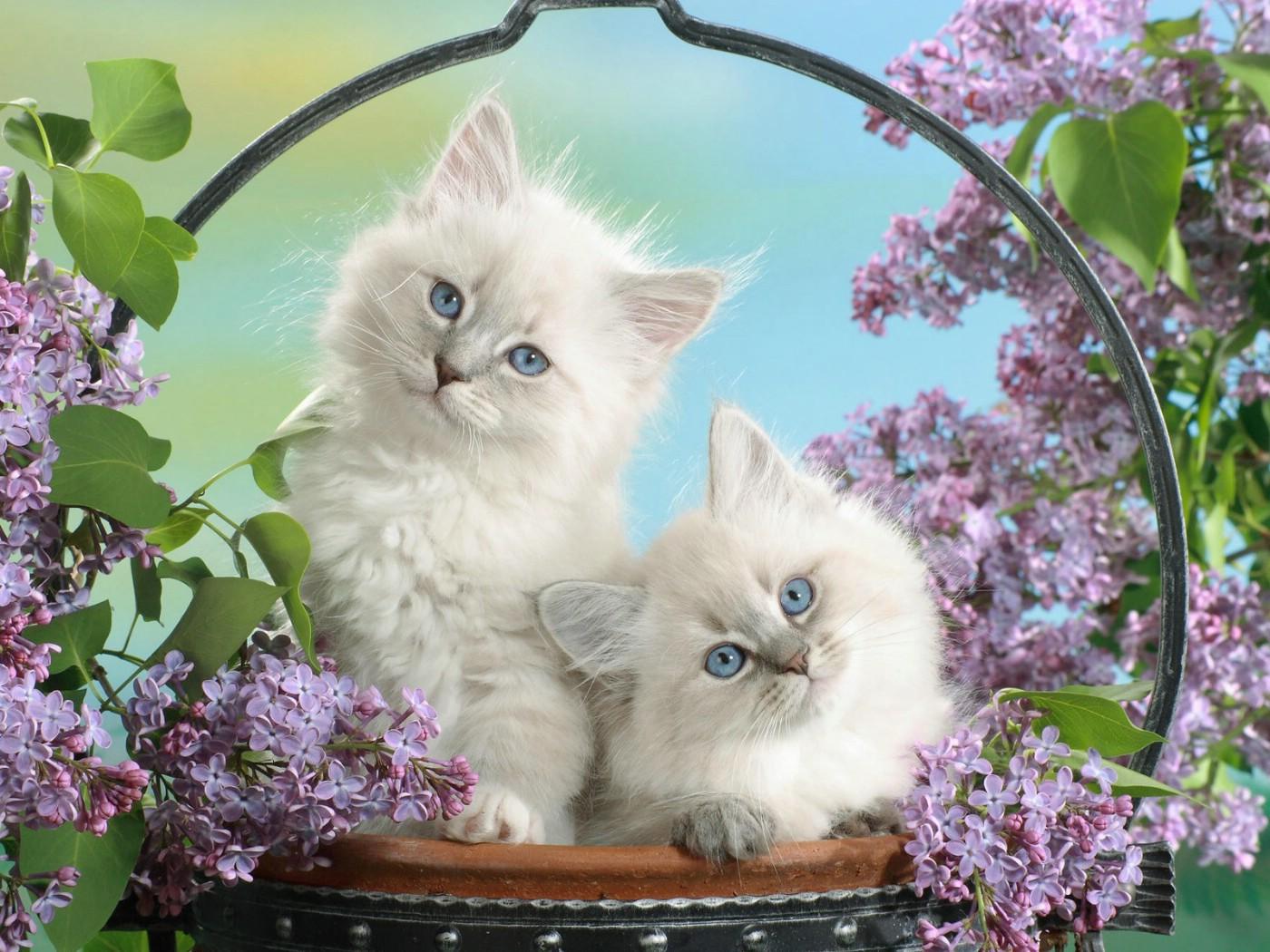壁纸 动物 猫 猫咪 小猫 桌面 1400_1050