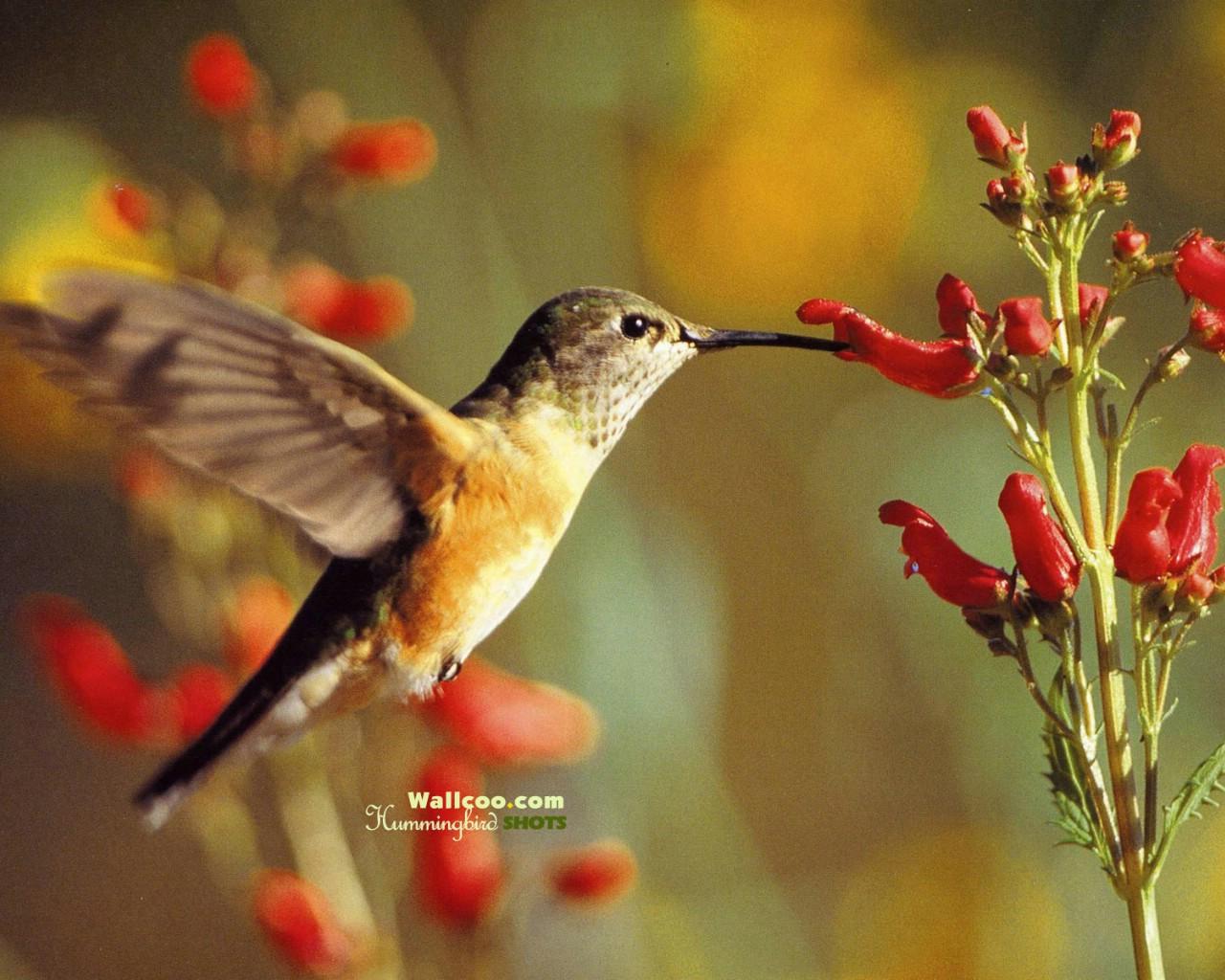 蜂鸟棚拍人像美女