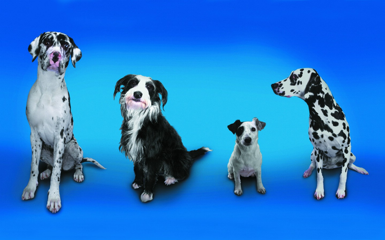 壁纸/趣怪狗狗合照趣味可爱狗狗图片壁纸