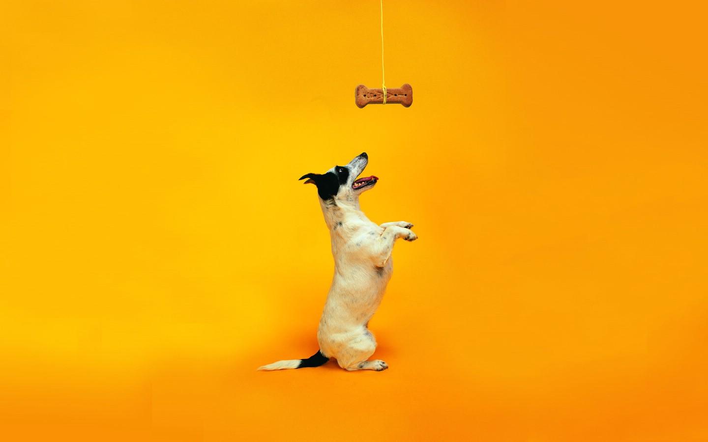 壁纸1440×900狗狗趣怪动作 趣味可爱狗狗图片壁纸壁纸 猫咪狗狗的趣