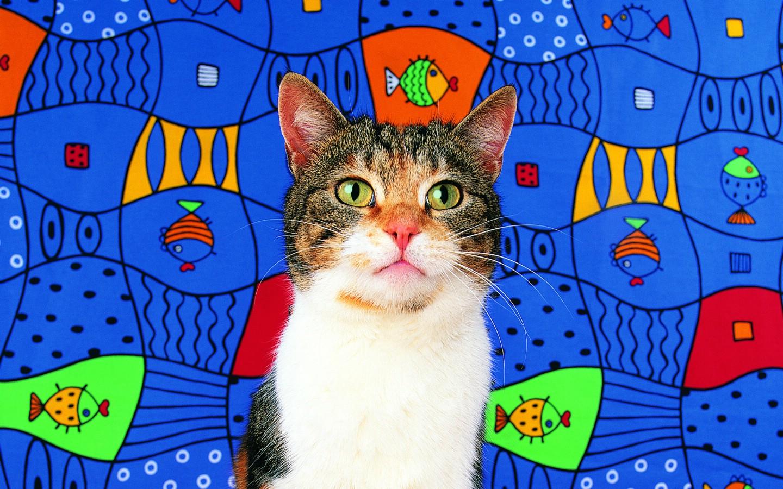壁纸1440×900鱼 趣味可爱小猫图片壁纸壁纸
