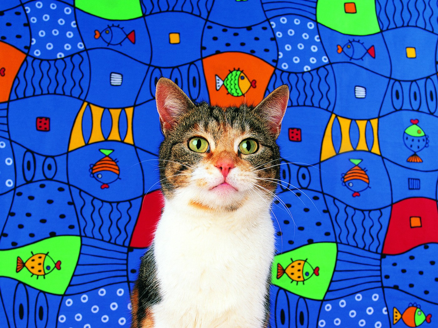 壁纸 狗狗/鱼趣味可爱小猫图片壁纸