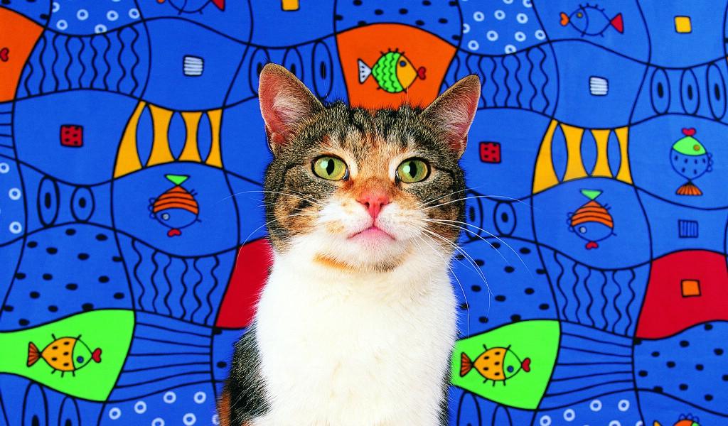 壁纸1024×600鱼 趣味可爱小猫图片壁纸壁纸 猫咪狗狗的趣怪神态壁纸