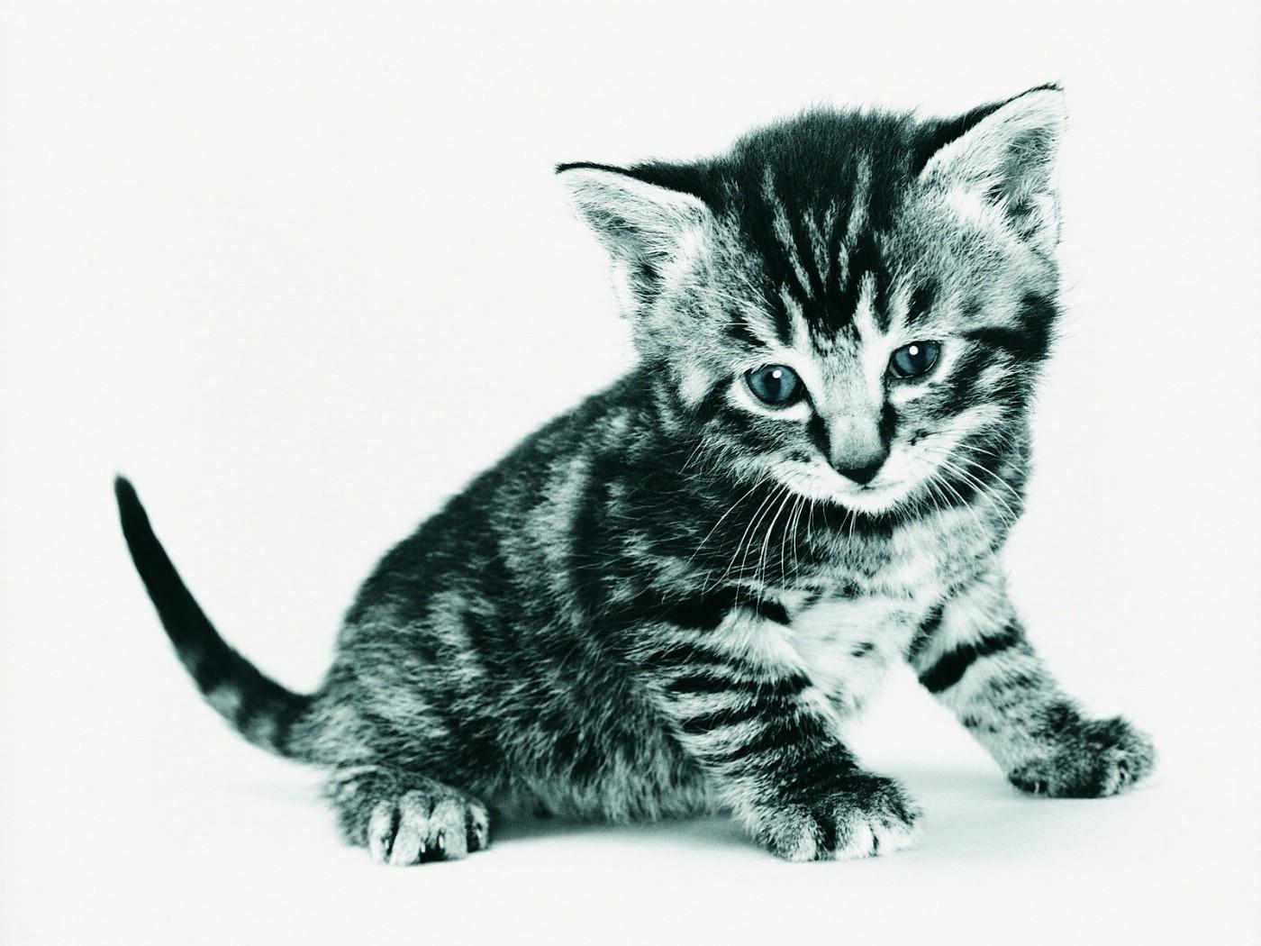 来画超萌猫咪手绘教程