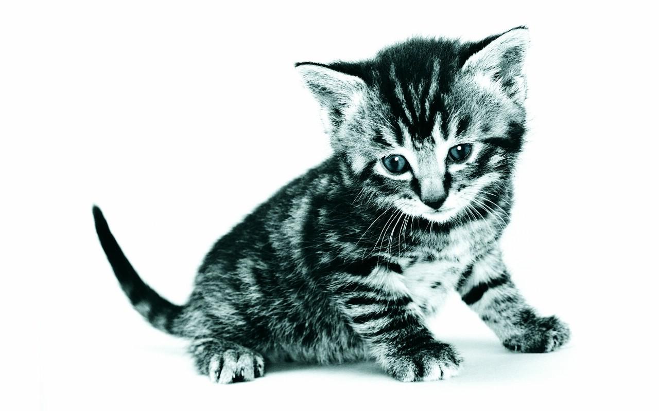 超萌小猫 趣味可爱小猫图片壁纸