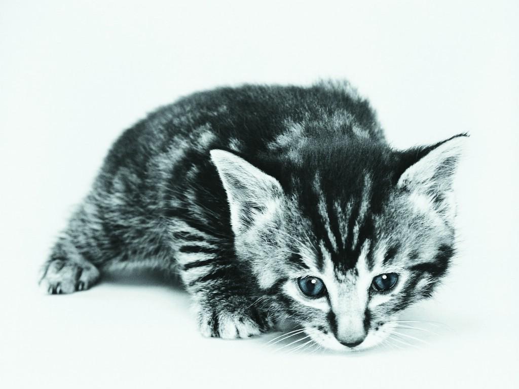 壁纸/超萌小猫趣味可爱小猫图片壁纸
