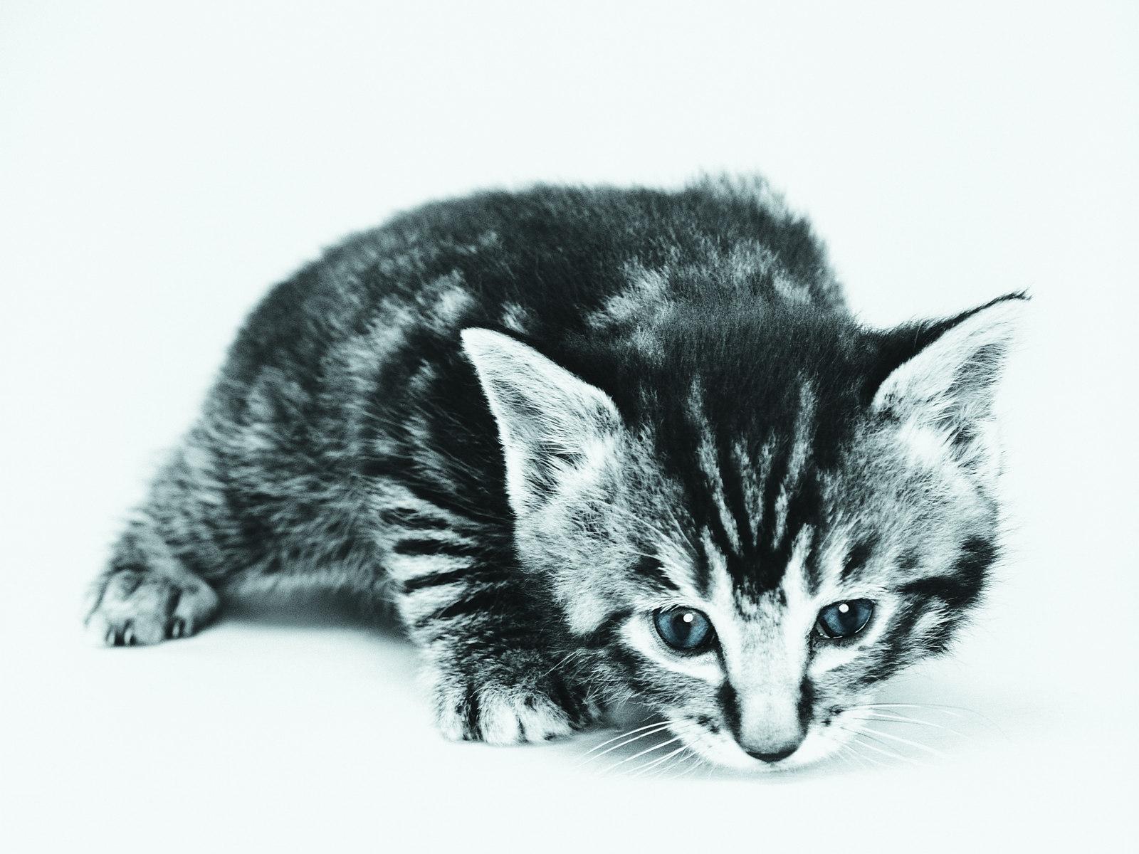 壁纸 狗狗/超萌小猫趣味可爱小猫图片壁纸