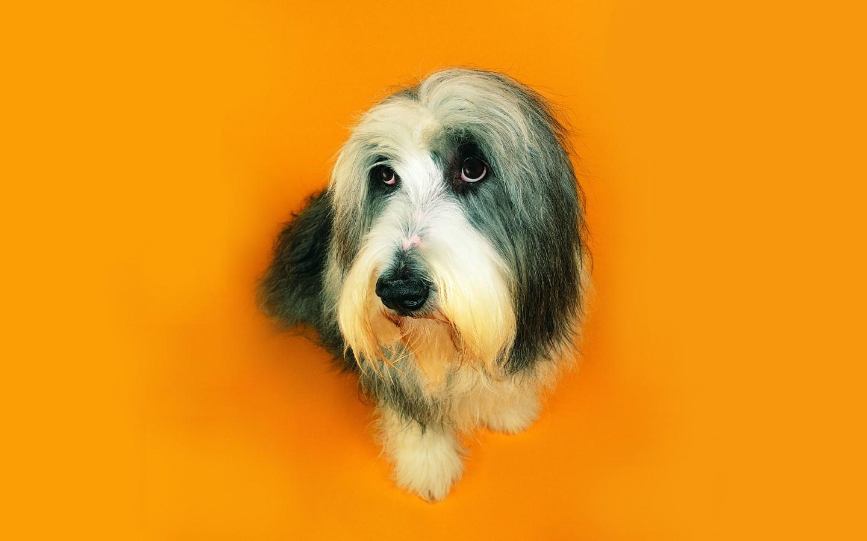 可爱的狗狗猫猫壁纸
