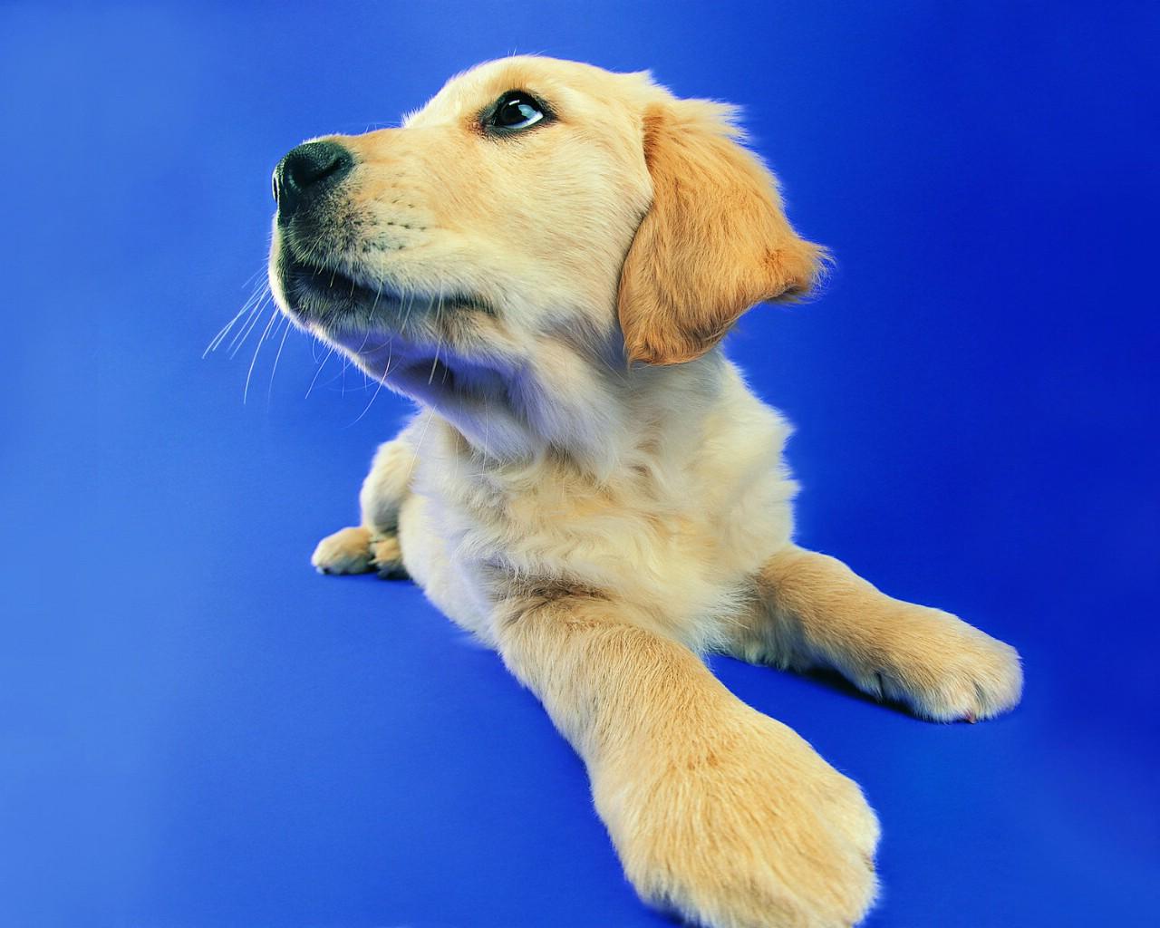 壁纸1280×1024趣味可爱狗狗图片壁纸壁纸