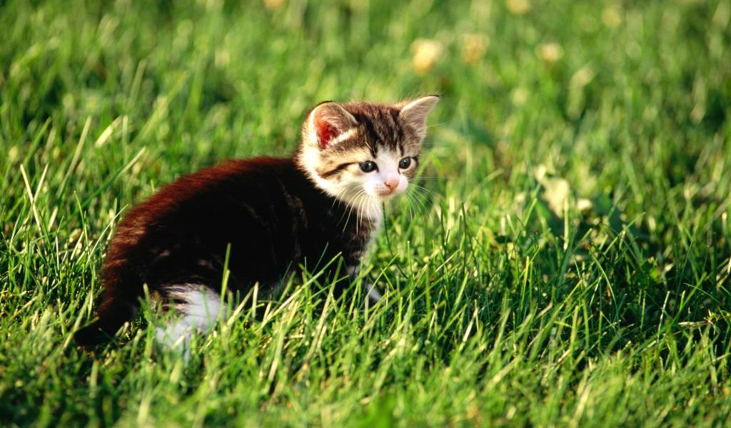 毛绒可爱猫宝宝写真 三个月大的小猫宝宝壁纸