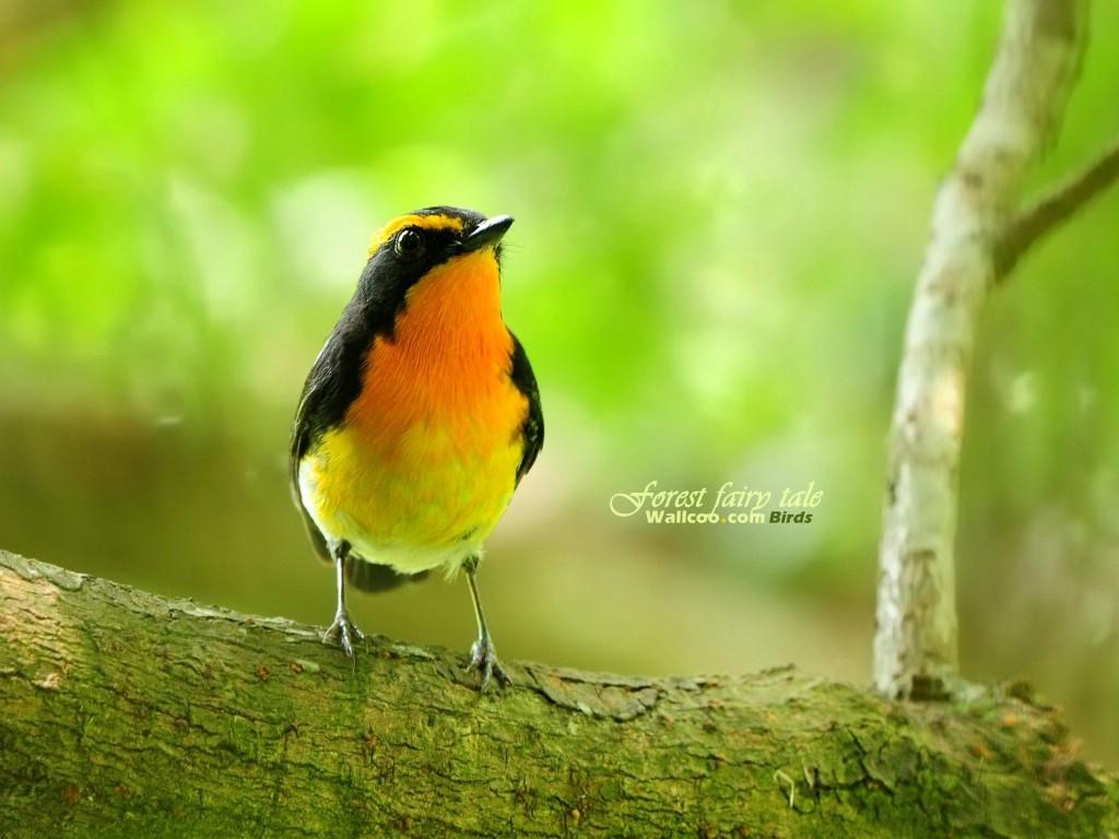 春天林间的小精灵 - 香儿 - xianger
