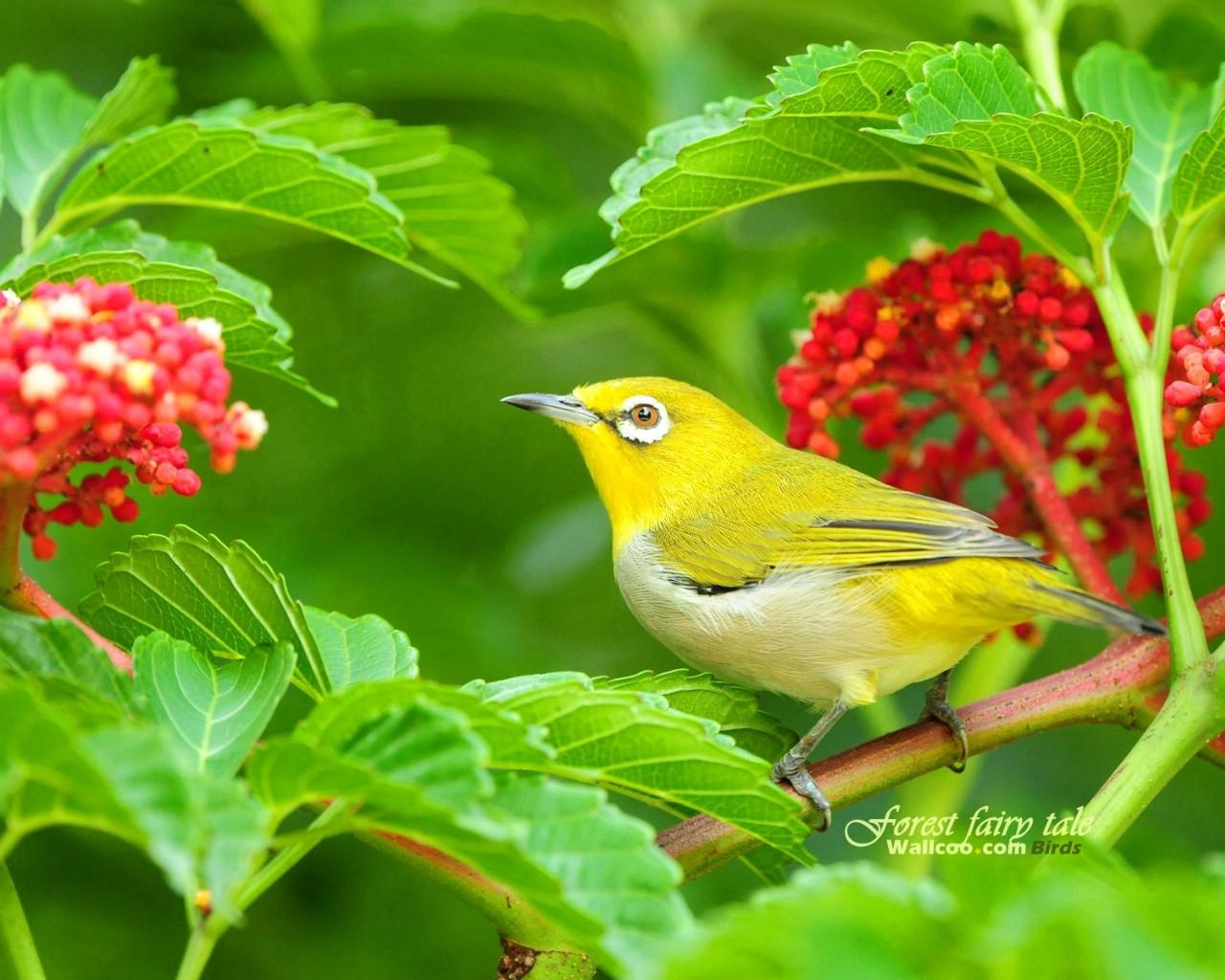 壁纸/树林里的小精灵 春天可爱小鸟壁纸 如画般的小鸟艳丽小鸟图片...