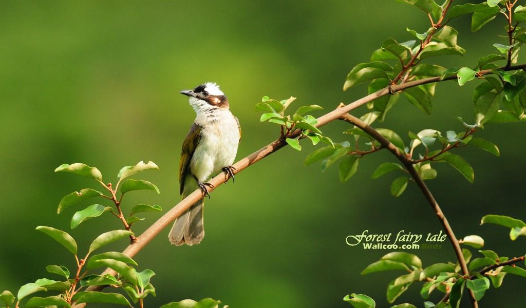绿叶树枝小鸟图片壁纸壁纸 树林里的小精灵可爱小鸟壁纸图片动物壁纸