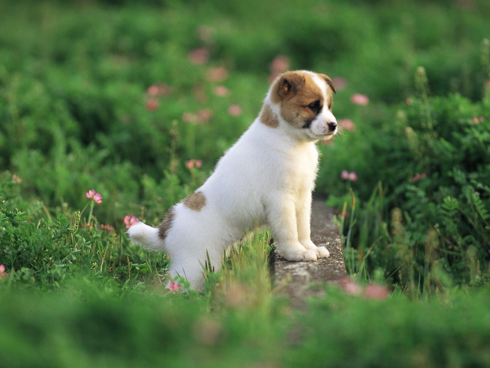 壁纸1600×1200可爱小狗狗壁纸