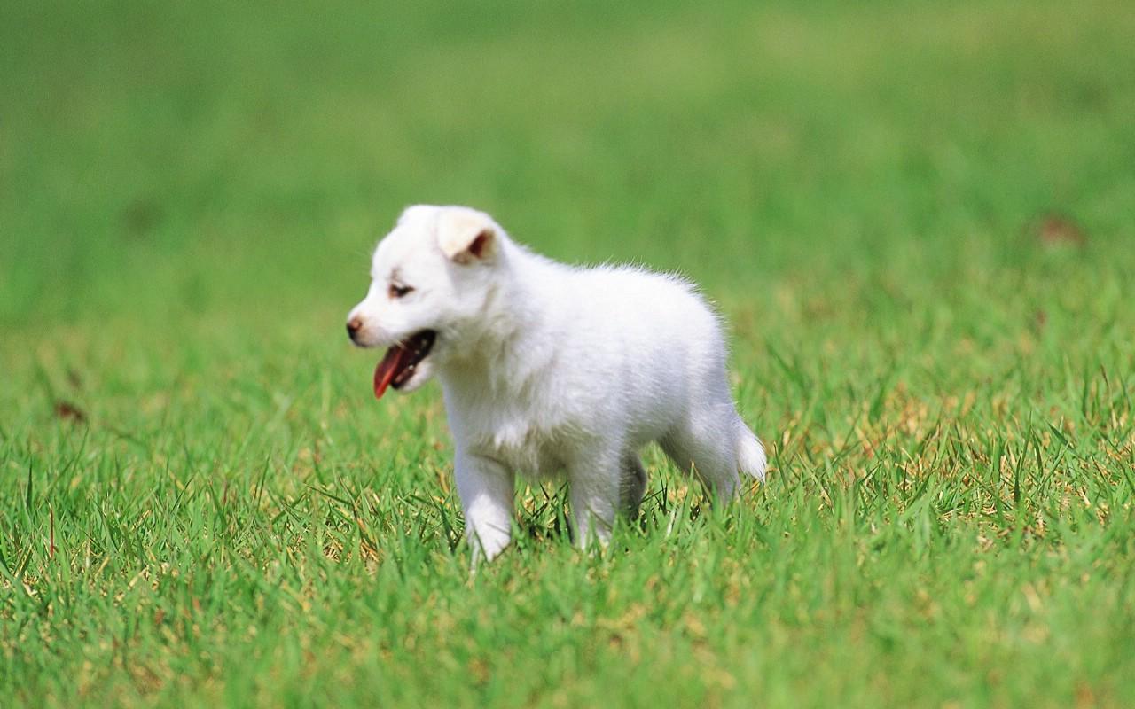 小狗狗的郊游壁纸图片动物壁纸动物图片素材桌面壁纸
