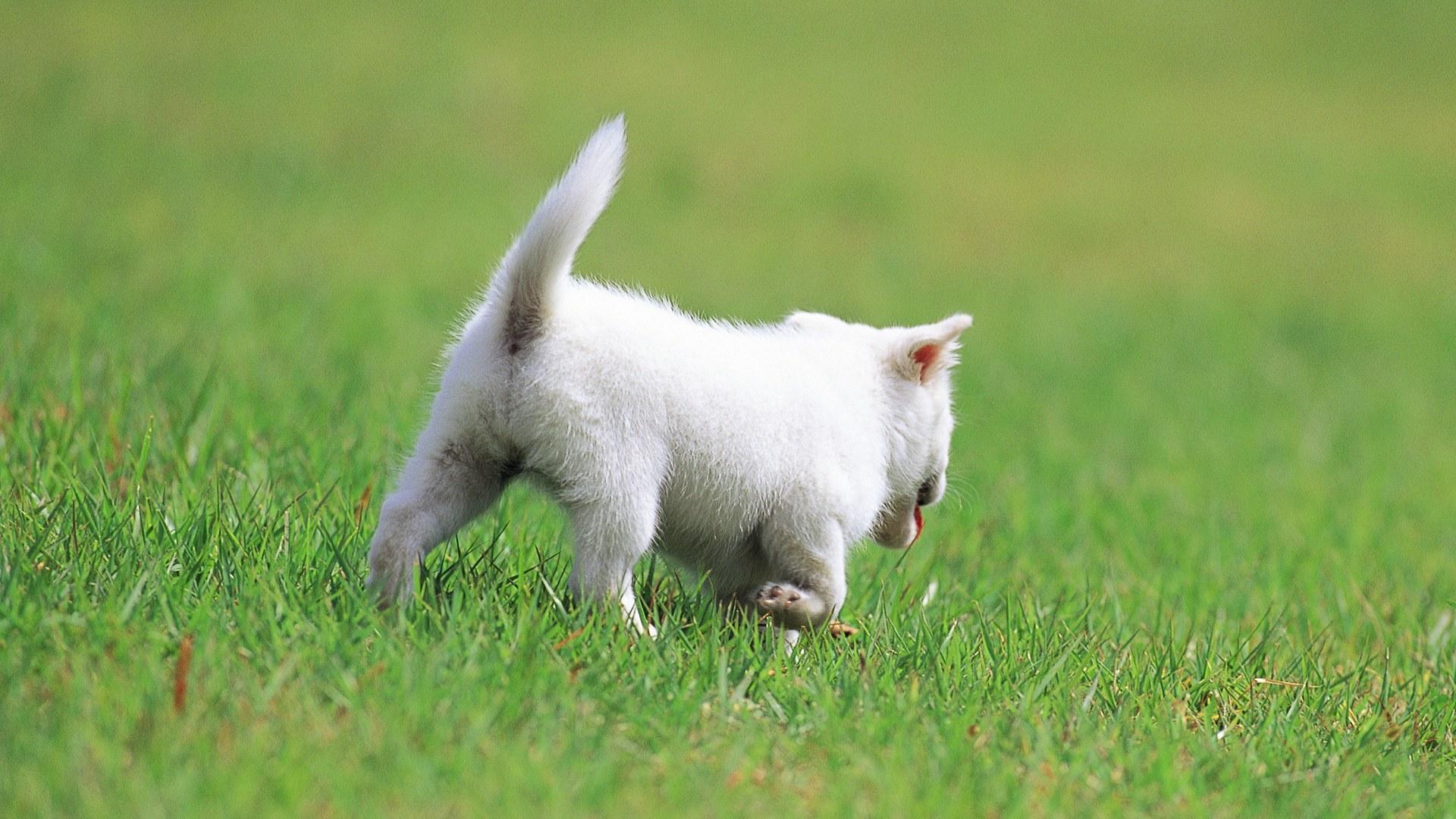 小狗狗动物高清电脑桌面壁纸5动物宽屏壁纸下载