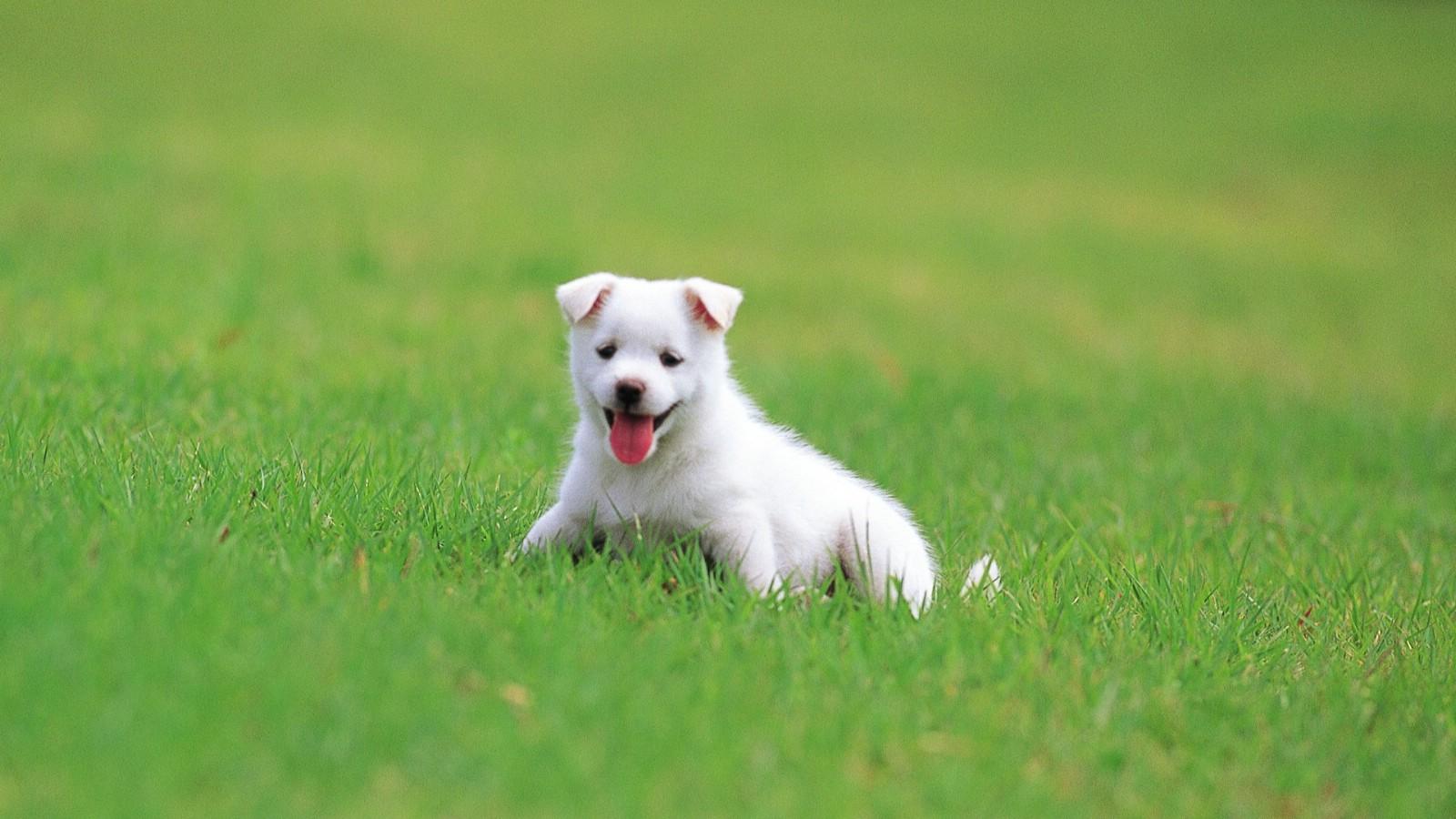 照片_卖萌可爱小狗头像_可爱小狗卖萌壁纸 - 新闻网