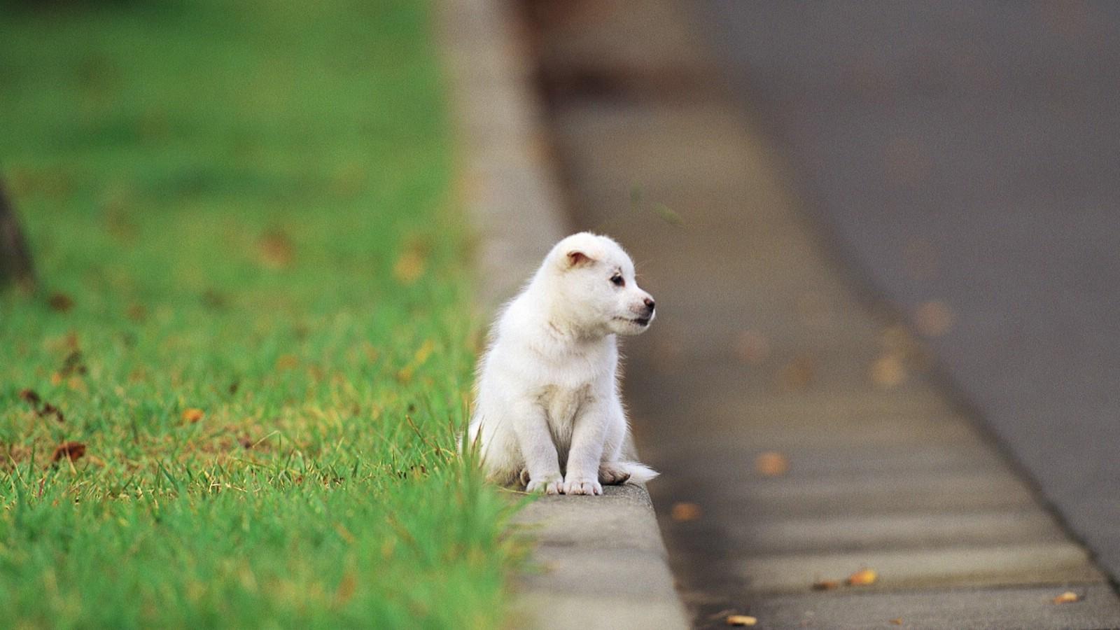 壁纸1600×900可爱小狗狗壁纸
