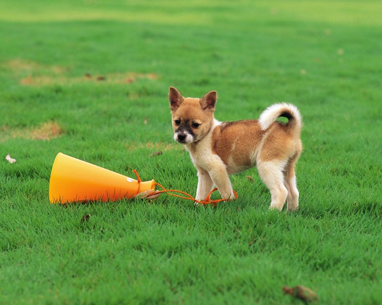 壁纸1280×1024可爱小狗狗壁纸