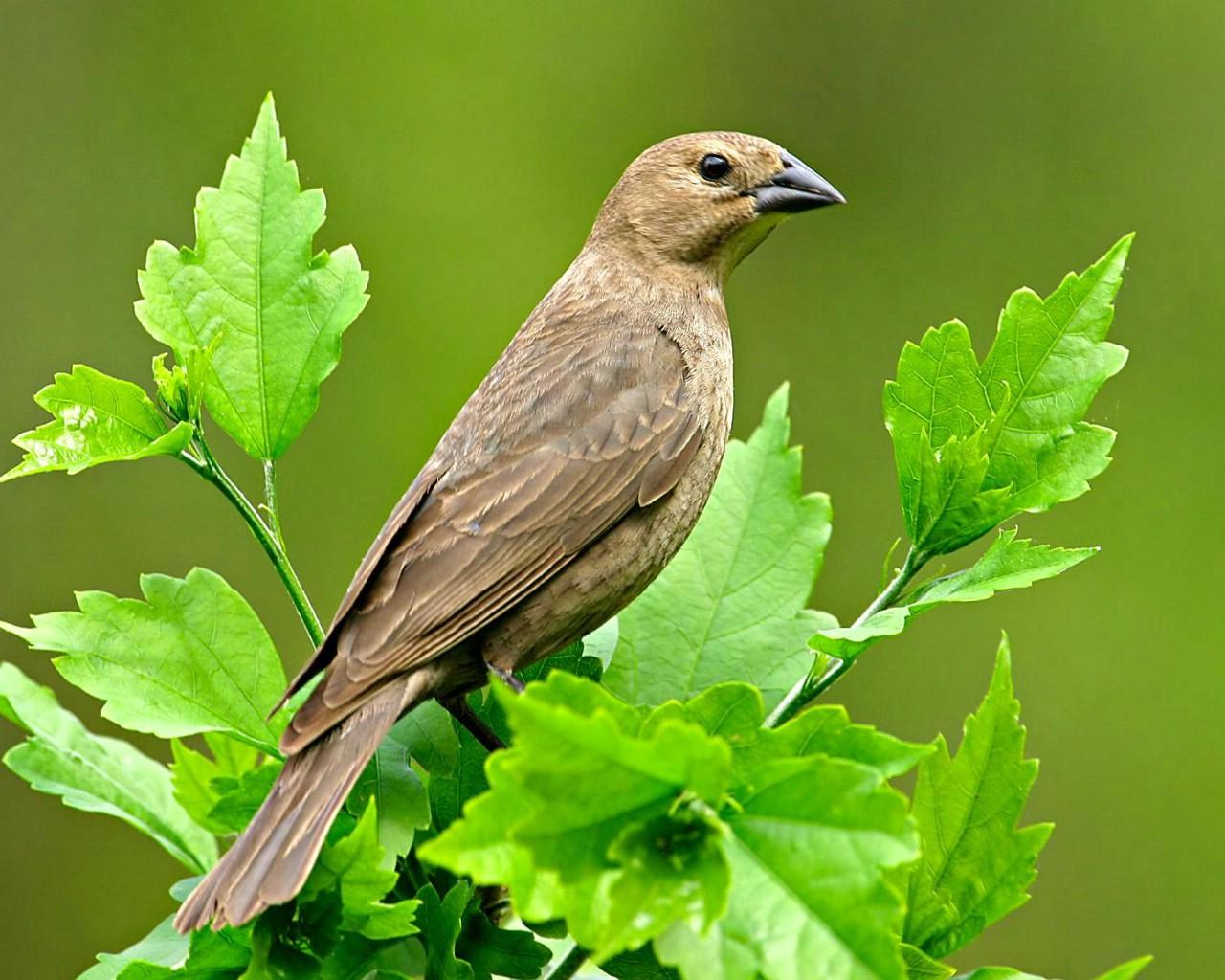 鸟的图片 鸟的图片和名字