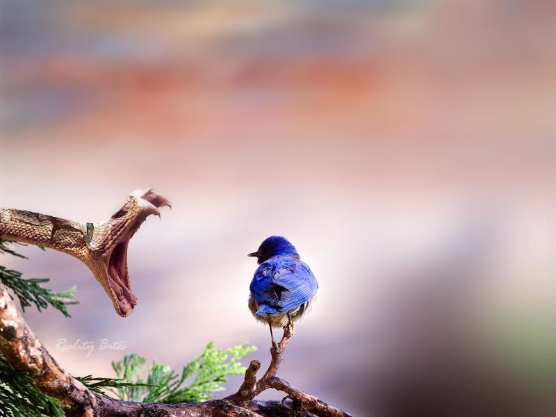 壁纸800×600A Dreamy World 梦幻风景全系列 第三辑 A Dreamy World 梦想世界风景壁纸壁纸 A Dreamy World 梦幻风景全系列第三辑壁纸图片风景壁纸风景图片素材桌面壁纸
