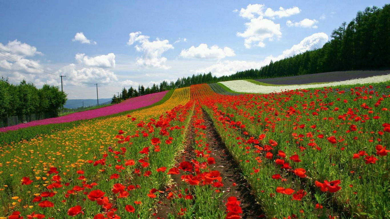 山水花风景桌面壁纸,桌面壁纸花自然风景,动态花风景手机壁纸