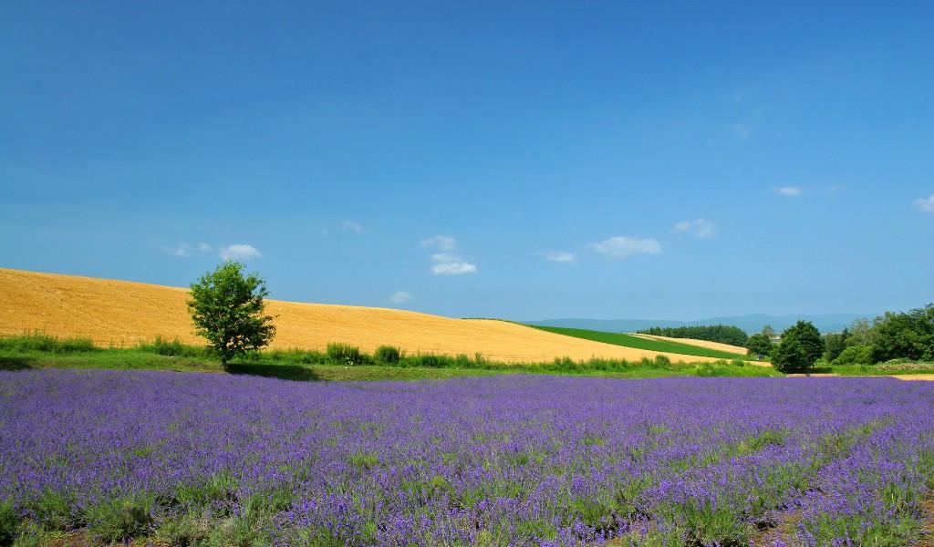 我的家乡不但风景优美,而且物产丰富,我爱我.