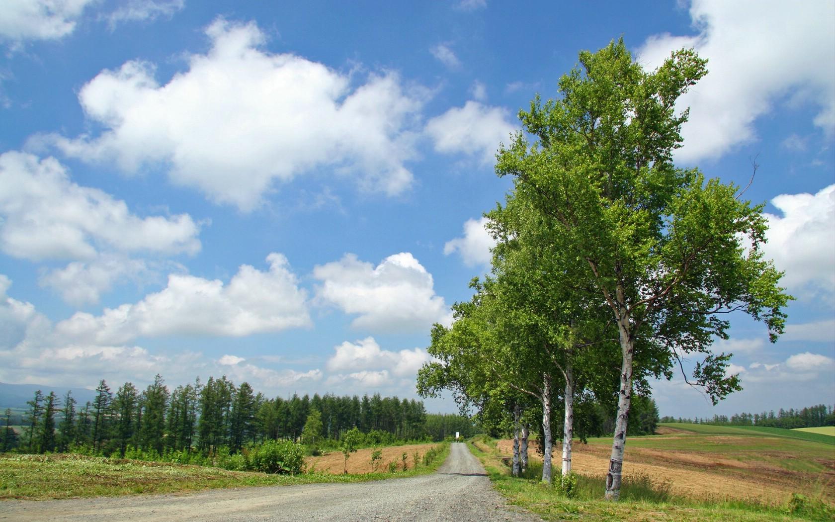 北海道天堂富良野与美瑛田园摄影集壁纸图片-风景壁纸-风景图片素材