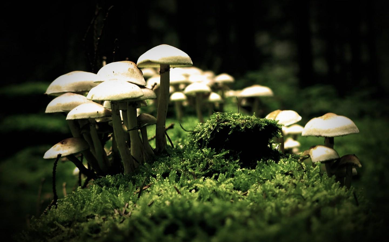 自然随拍 暗调风景壁纸 蘑菇 暗调风景摄影壁纸