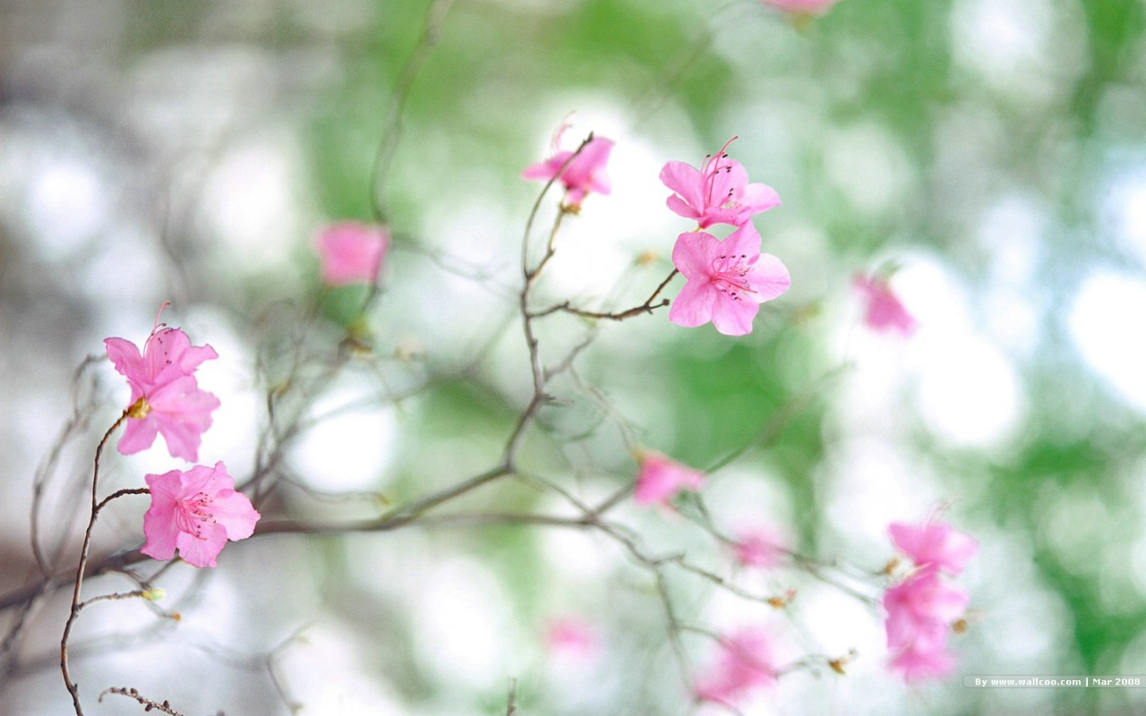 壁纸1280×800春天风景图片 春季摄影 nature scene in spring
