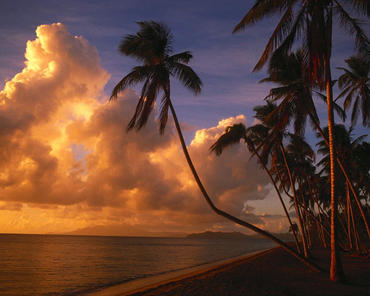 暮色映照的椰林海岸壁纸图片壁纸壁纸 大自然纯朴之美壁纸图片风景
