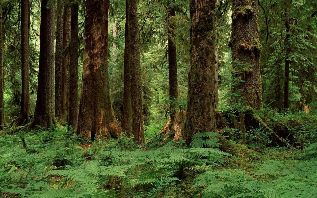 顿州 霍河温带雨林壁纸壁纸,地球瑰宝大尺寸自然风景壁纸精选 第三
