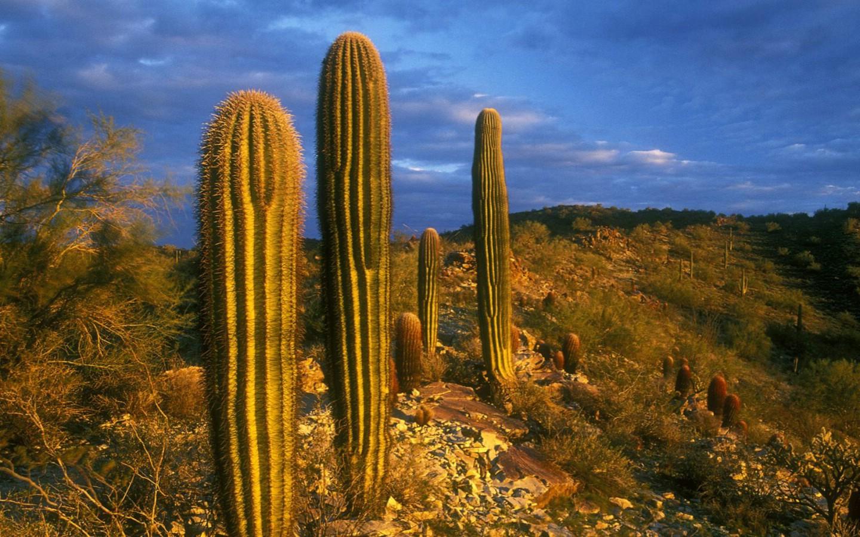 900亚利桑那州 南山公园仙人掌壁纸壁纸,地球瑰宝自然风景
