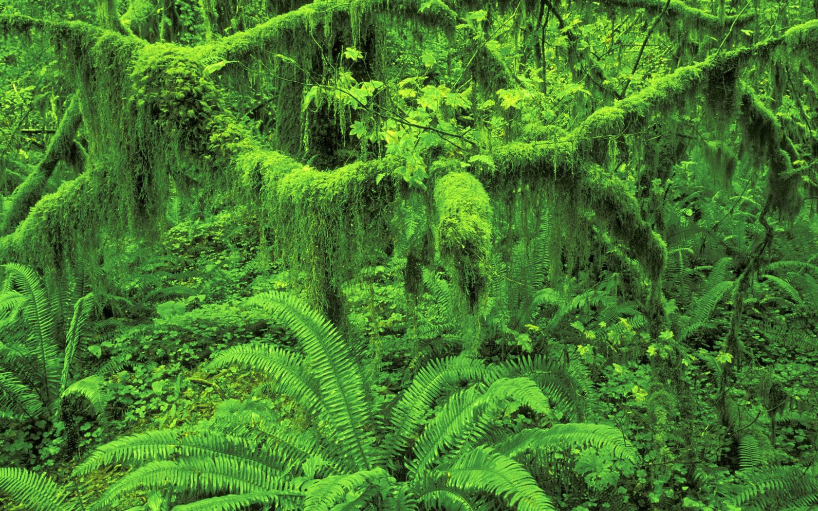 国家公园 霍河雨林壁纸壁纸,地球瑰宝自然风景精选 第八辑壁纸图片