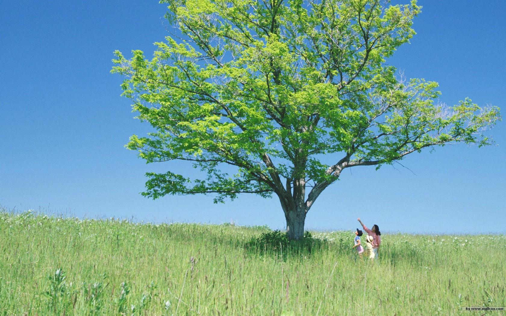 壁纸1680 1050感受大自然 人与自然主题壁纸 感受大自然 田野树荫壁纸,感受大自然 人与自然主题摄影壁纸图片