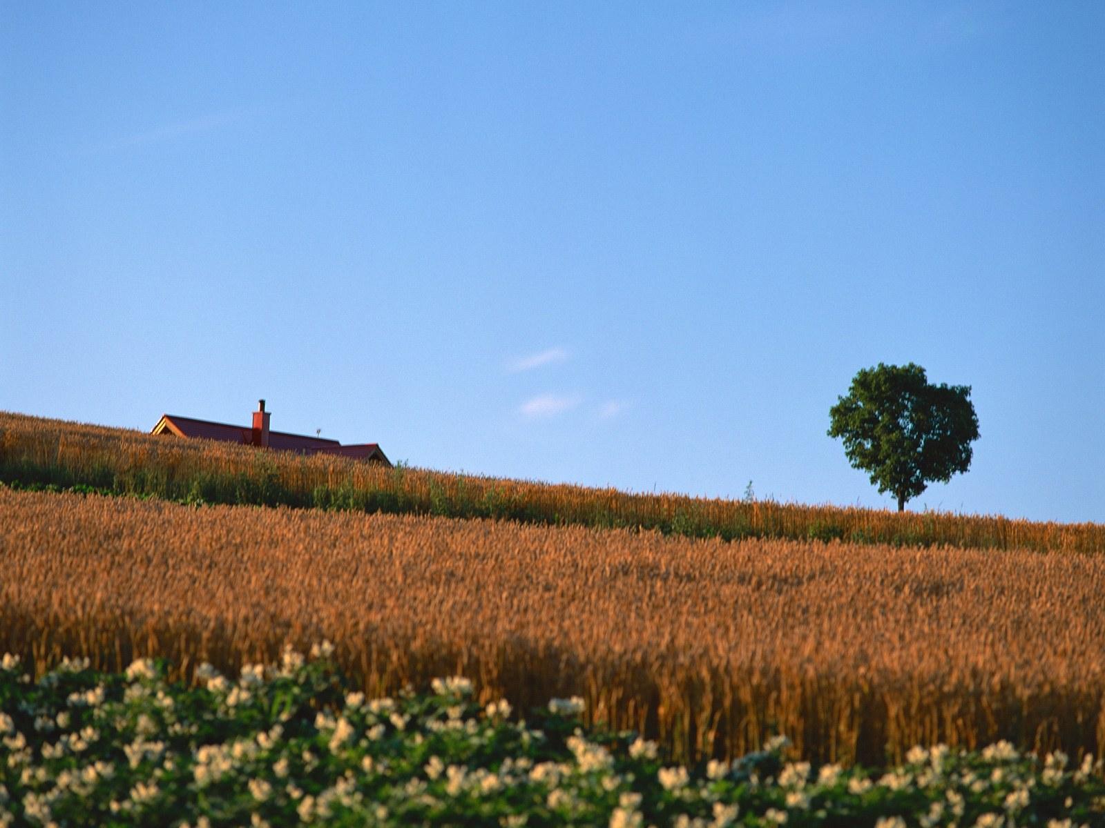 关于乡村风光的图画