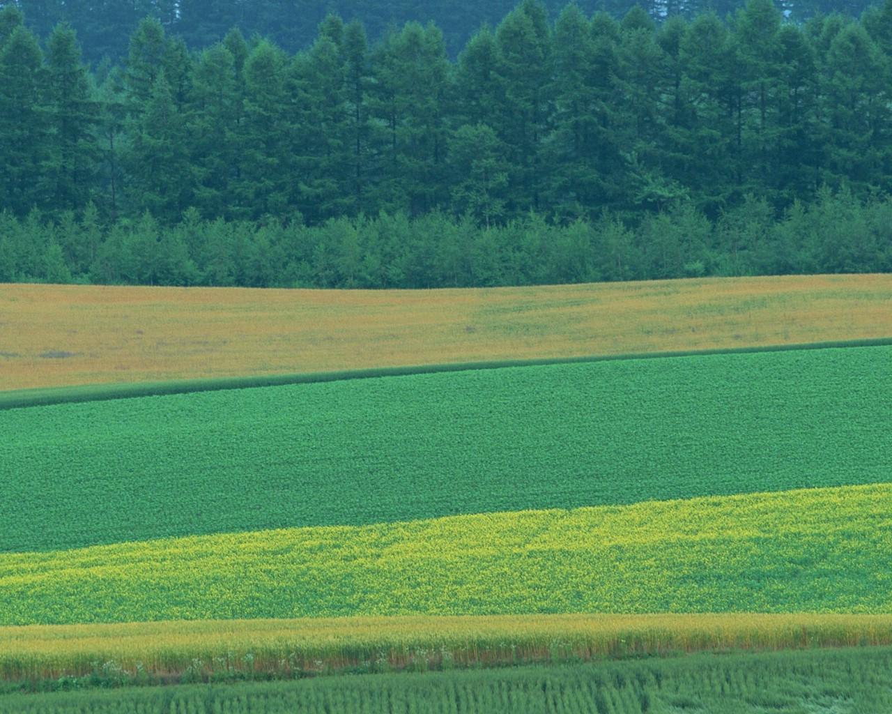 美国乡村农场壁纸