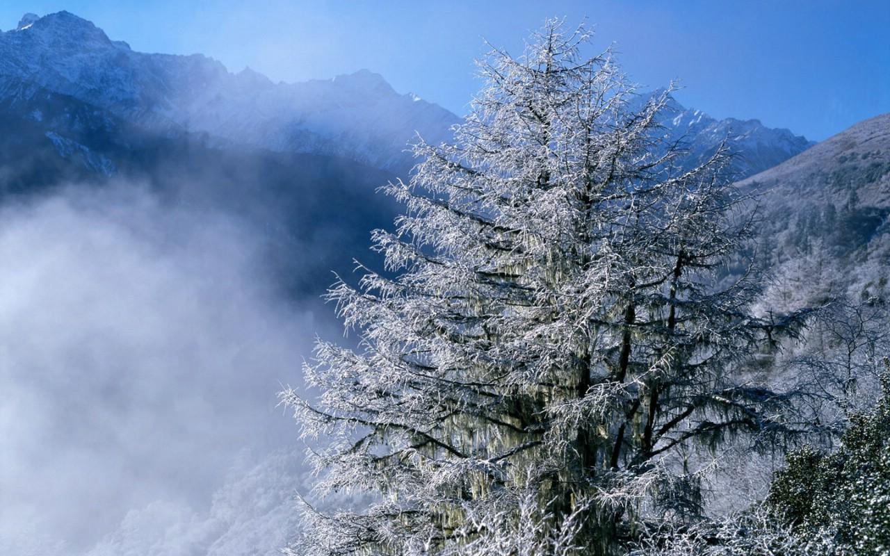 design 雪景图片大全桌面背景图片高清桌面壁纸下载 第10  梅花背景