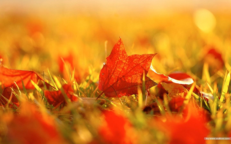 落叶图片壁纸 浓浓秋色秋天树叶摄影壁纸图片风景壁纸风景图片素材