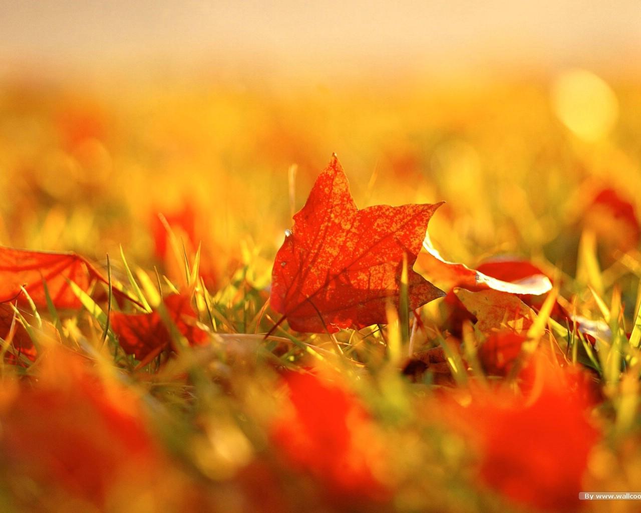 浓浓秋色秋天树叶摄影壁纸图片风景壁纸风景图片素材