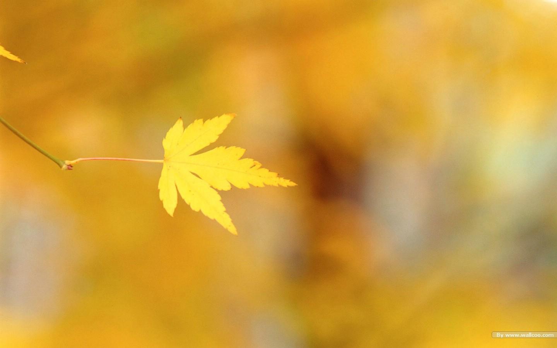 浓浓秋色 秋天树叶摄影壁纸桌面壁纸4 jpg高清图片