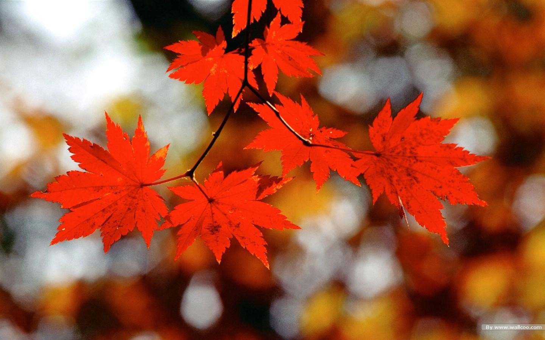 浓浓秋色秋天树叶摄影壁纸图片风景壁纸风景图片素材桌面壁纸