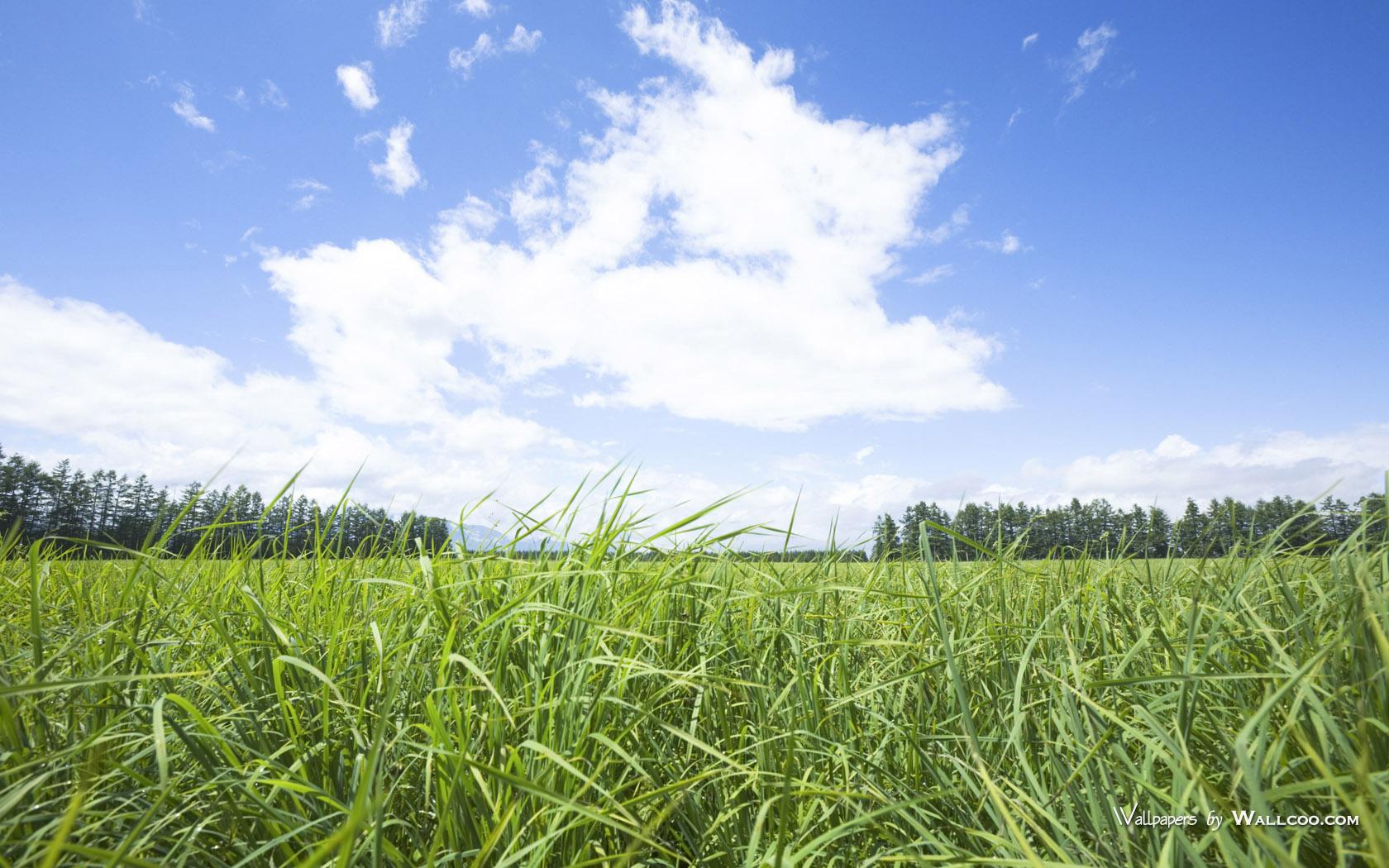 1050原野草原草地图片 Vast Grassland Photography壁纸,青青草原