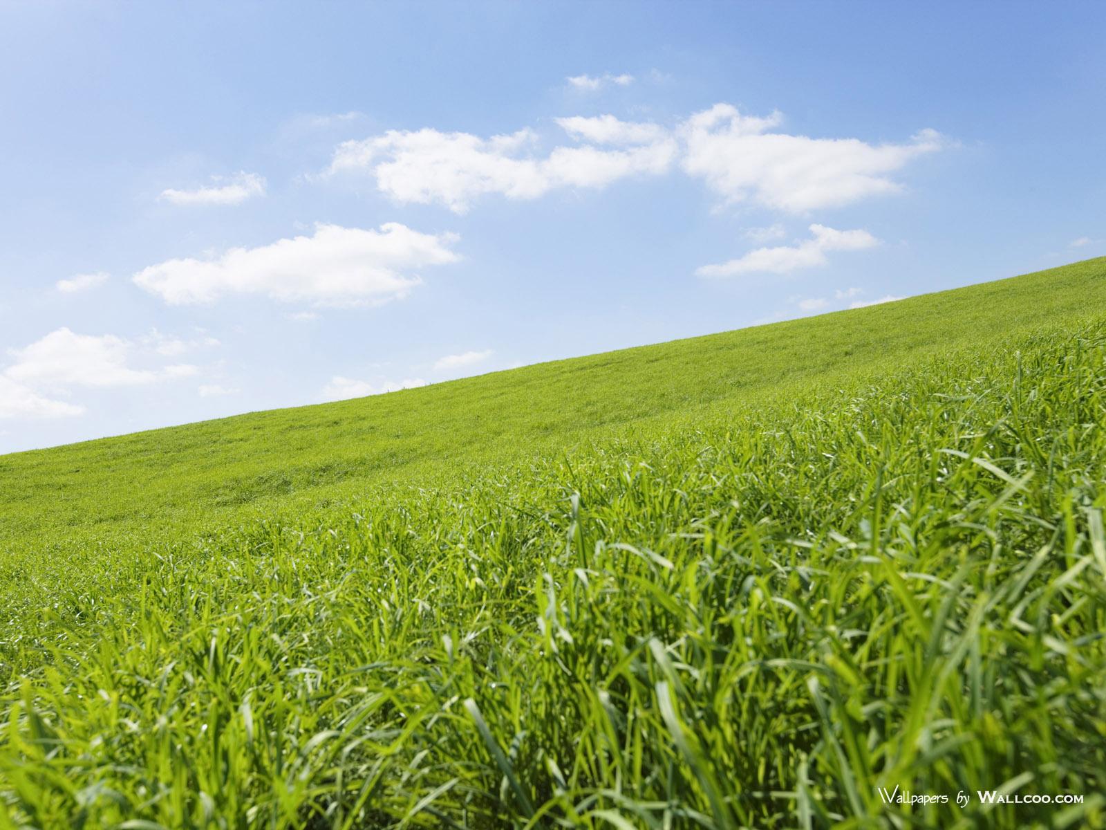 1200原野草原草地图片 Vast Grassland Photography壁纸,青青草原 草原天空摄影壁纸壁纸图片