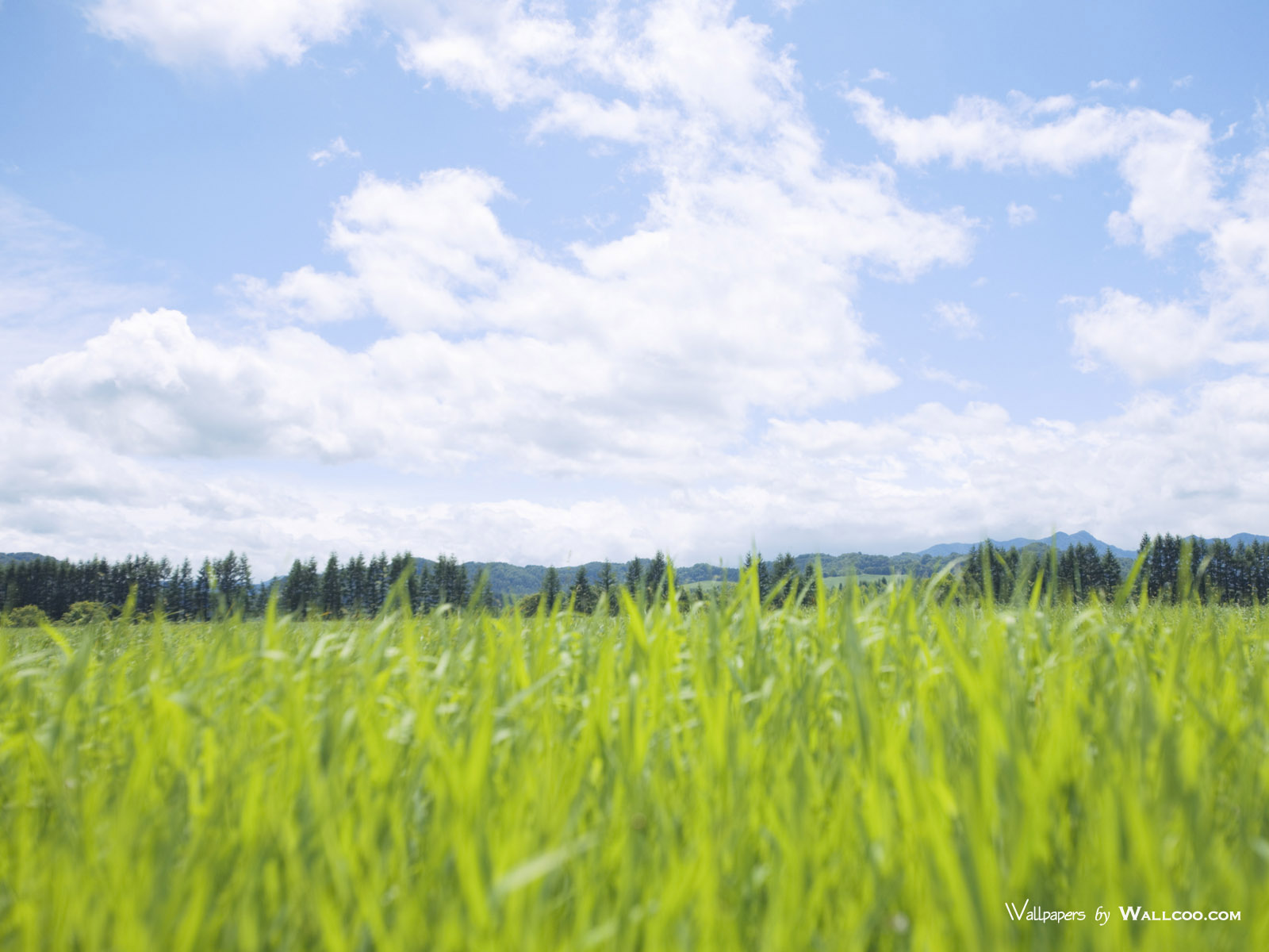 1200原野草原草地图片 Vast Grassland Photography壁纸,青青草原